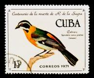 Kubanisches West-zena Spindalis Spindalis pretrei, 100. Ann vom Tod von R De-La-Sagra-serie, circa 1971 Stockfotos