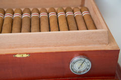 Kubansk cigarr och luftfuktare Fotografering för Bildbyråer