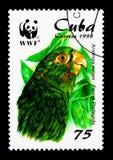 Kubansk parakiter (Arantinga euops), papegojaserie, circa 1998 Arkivfoto