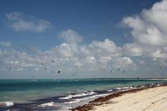 Kubansk strand Ett ställe med ideala villkor för att surfa för drake royaltyfri foto