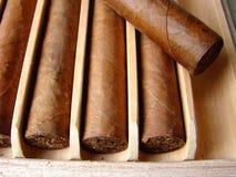 kubanska bruna cigarrer Royaltyfri Foto