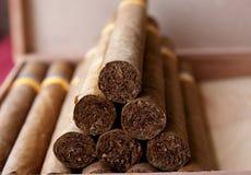 kubanska cigarrer Fotografering för Bildbyråer