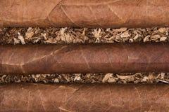 Kubanska cigarrer på tobak Arkivbild