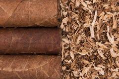Kubanska cigarrer på tobak Arkivbilder