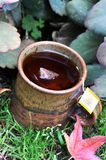 Kubek ciepli rooibos herbaciani zdjęcie stock
