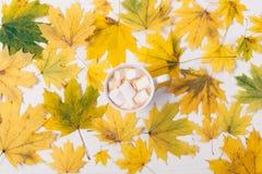 Kubek kakao z Marshmallows obrazy stock