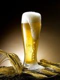 Kubek piwo Zdjęcia Stock