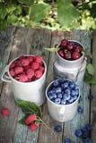 Kubki jagody w ogródzie Zdjęcia Stock