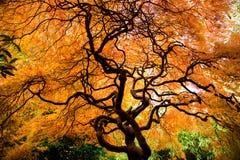 Kubota Garden Stock Photo