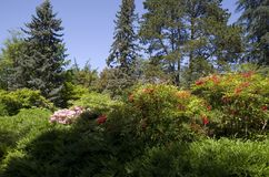 Kubota Japanese garden, Seattle, May Stock Photo