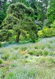 Kubota Garden, Seattle Stock Photography