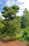 Kubota trädgård, Seattle Arkivbilder