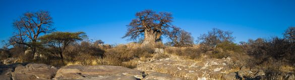 Kubu Island, Botswana. Kubu Island with baobabs and rocks, Botswana, Africa Stock Photography