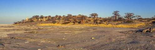 Kubu Island, Botswana. Kubu Island with baobabs and rocks, Botswana, Africa Stock Photos