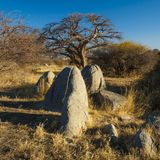 Kubu Island, Botswana. Kubu Island with baobabs and rocks, Botswana, Africa Royalty Free Stock Photo