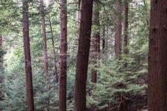 Kucbarski Lasowy stanu park Pennsylwania Zdjęcia Royalty Free