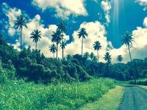 Kucbarskich wysp drzewka palmowe fotografia stock