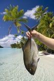Kucbarskie Wyspy - Łowi złapanego w Aitutaki Lagunie Zdjęcia Royalty Free