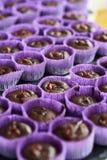 Kuchen in der lila Verpackung Stockfoto