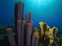 Kuchenka ogienia i gąbki fajczany koral Zdjęcia Stock