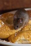 kuchenna mysz Zdjęcia Stock