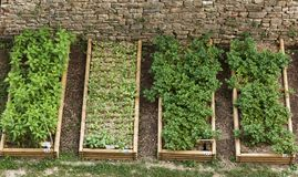Kuchenni ogródy Obraz Royalty Free