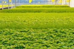 kuchenni rabatowi szklarniani ziele Obrazy Royalty Free