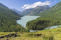 Kucherla lake. Altai Mountains, Russia. Royalty Free Stock Photos