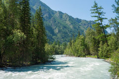 Kucherla river in the forest. Trekking in the Altai Mountains Stock Image