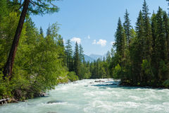 Kucherla river. Trekking in the Altai Mountains Stock Images