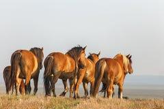 Kudde van de paarden Royalty-vrije Stock Afbeeldingen