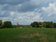 Kudde van deers Royalty-vrije Stock Foto's