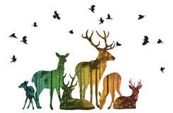 Kudde van herten met vogels royalty-vrije illustratie