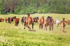 Kudde van het lopen paard Stock Foto's
