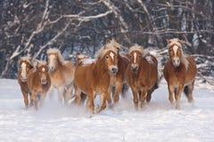 Kudde van het lopen paarden Royalty-vrije Stock Afbeeldingen