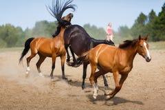 Kudde van het lopen paarden royalty-vrije stock foto