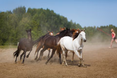 Kudde van het lopen paarden royalty-vrije stock afbeelding