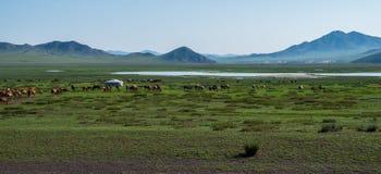 Kudde van het weiden van paarden Royalty-vrije Stock Fotografie