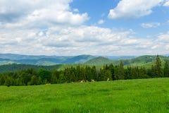 Kudde van koeien die in Roemenië weiden Royalty-vrije Stock Afbeeldingen