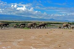 Kudde van olifant Stock Afbeeldingen