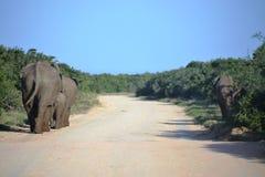 Kudde van olifant Royalty-vrije Stock Afbeelding