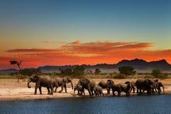 Kudde van olifanten Stock Foto's