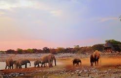 Kudde van olifanten bij een waterhole Royalty-vrije Stock Foto's