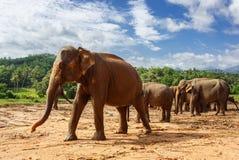 Kudde van olifanten in de aard royalty-vrije stock afbeelding