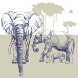 Kudde van olifanten in de savanne, contourtekening met afgezwakte, vlakachtergrond Royalty-vrije Stock Afbeelding