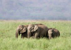 Kudde van olifanten, Jim Corbett stock afbeelding