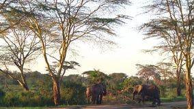 Kudde van olifanten Serengeti stock footage