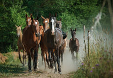 Kudde van paarden Royalty-vrije Stock Fotografie