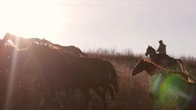 Kudde van paarden stock videobeelden