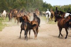 Kudde van paarden Royalty-vrije Stock Afbeelding